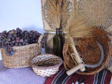 Harvested grapes with barley